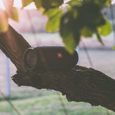 Op deze manier bestrijd je een buxusrups in jouw tuin